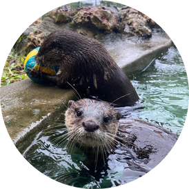 VIP Otter Experience 1