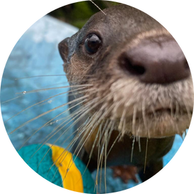 VIP Otter Experience 2