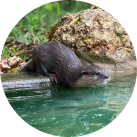 VIP Otter Experience 5
