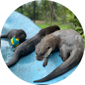VIP Otter Experience 8