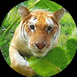 wildlife tour 8