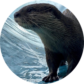 VIP Otter Experience 7